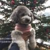 雨の日でも犬と一緒にお出かけできるベイクォーター横浜のクリスマス
