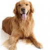 【犬判断・もしもあなたが犬だったら?】でどうしてもトイプードルにならない私