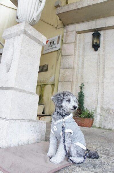 【元町ヒルサイドガーデン】プロの写真家&しつけの先生による愛犬の写真教室