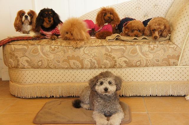 【元町ヒルサイドガーデン】の愛犬と楽しむカメラ教室「山手HILL SIDE CLASS」