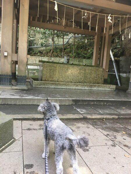 江島神社の手水舎の画像