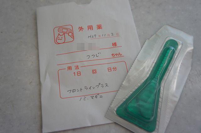 tsutsuji