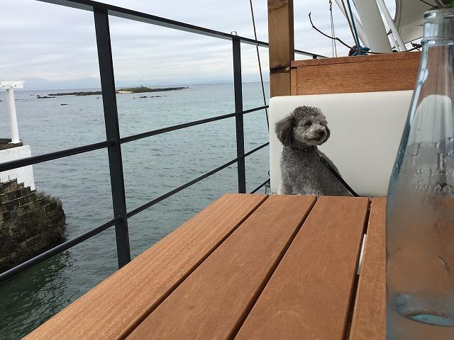 【MARINE&FARM Sajima(マリン&ファーム佐島)】佐島の海を望む絶景カフェレストラン