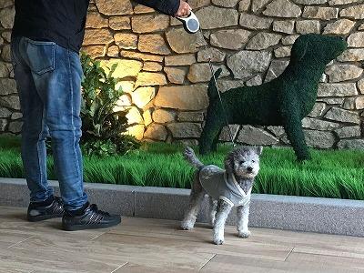 doghotel2