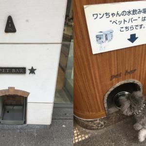横浜元町愛犬と一緒に入れるお店まとめ