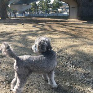 海の公園「犬の遊び場」は登録なしで24時間自由に遊べるドッグラン