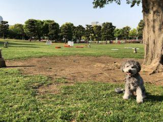 みなとみらい【臨港パーク】ベイブリッジを望む広い芝生の緑地広場を散歩