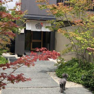 【鎌倉和食 楠の木】愛犬と贅沢な時間を過ごせる和食レストラン