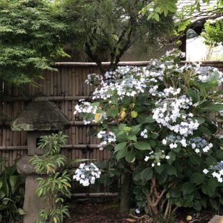 犬と境内を散策できる【鎌倉本覚寺】とレンバイ~大町周辺スポット