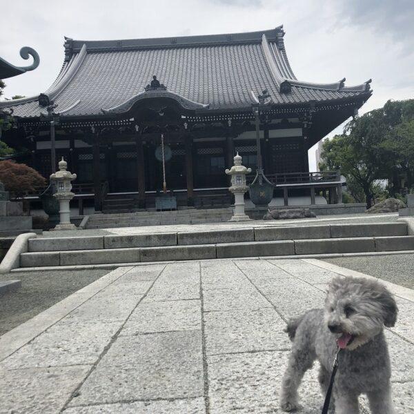 犬と境内を散策できる【鎌倉本覚...