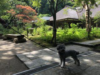 愛犬と鎌倉江の島七福神巡り【浄智寺】北鎌倉の静寂なお寺