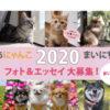 あなたの愛犬がカレンダーに!フェリシモ「まいにちにゃんこ・わんこ2020」募集中